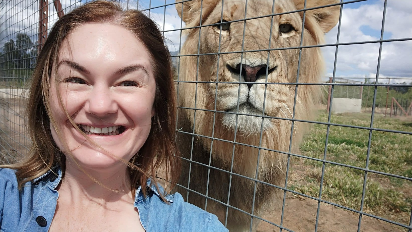 Lions Selfie