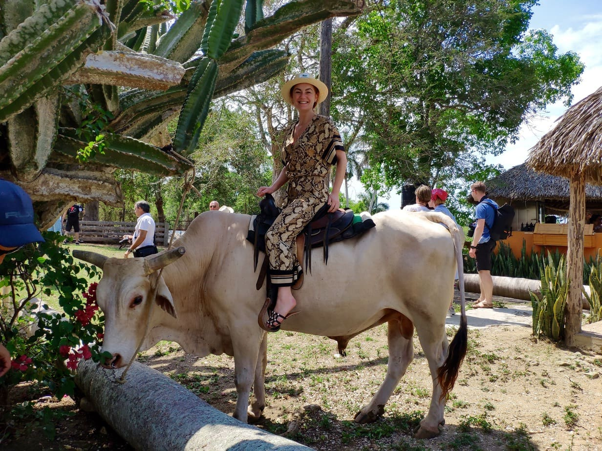 Bull riding in Cuba